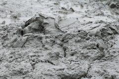 Argilla grigia, grey naturale del fango in paludi fotografia stock