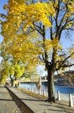 Argine Autumn Colors Fotografia Stock Libera da Diritti