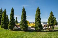 Argine del fiume con prato inglese verde ed alberi a forma di colonna in Immagini Stock Libere da Diritti