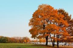 Argine del fiume di Mosca nel parco di Kolomenskoye Fotografie Stock