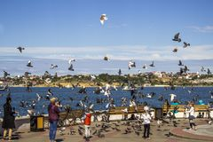 Argine a Sevastopol immagine stock libera da diritti