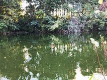 Argiope Aurantia oder gelbe Gartenkreuzspinne und Netz stockbilder