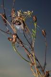 Argt spindelnederlag i rengöringsduk Arkivfoto