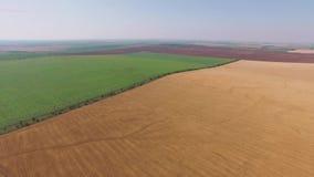 Argumentos agrícolas del vuelo del pájaro almacen de metraje de vídeo