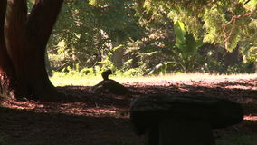 Argumentos de Bartlett Arboretum (1 de 7) almacen de video