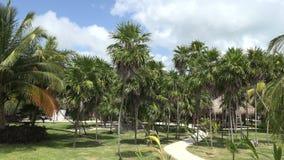 Argumentos tropicales del centro turístico almacen de metraje de vídeo