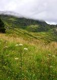Argyll森林公园在苏格兰 库存照片