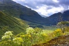 Argyll Forest Park en Ecosse Photo stock