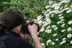 Argyranthemum in a green background. Photographer taking a close up image. Argyranthemum is a beautiful white flowers with long leaves. The image is taken in the stock photography