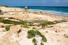 Arher strand på Socotraön, Yemen Arkivbild