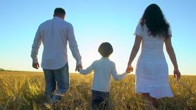 Aria aperta felice della famiglia che cammina sul giacimento di grano con il ragazzino Madre, padre, bambino del figlio divertend stock footage
