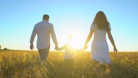 Aria aperta felice della famiglia che cammina sul giacimento di grano con il ragazzino Madre, padre, bambino del figlio divertend archivi video
