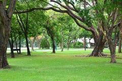 aria fresca in parco l'area verde crea un buon ambiente nella città affinchè la gente abbia attività all'aperto immagine stock
