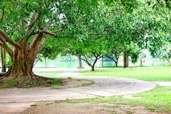 aria fresca in parco l'area verde crea un buon ambiente nella città affinchè la gente abbia attività all'aperto immagine stock libera da diritti