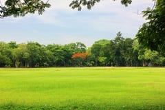 Aria fresca in parco l'area verde crea un buon ambiente nella città affinchè la gente abbia attività all'aperto fotografie stock libere da diritti