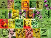 Arial floresce letras Foto de Stock Royalty Free