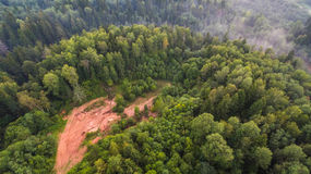 Arial Shot of Green Forest during Daytime Royalty Free Stock Images
