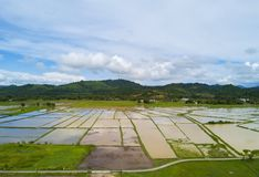 Arial view of beatiful green paddy field with blue sky at Langkawi Island.