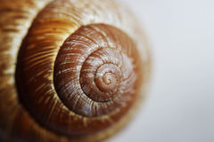 Arianta arbustorum is a medium-sized species of land snail, sometimes known as the copse snail , a terrestrial pulmonate gastropod Royalty Free Stock Photography