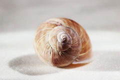 Arianta arbustorum is a medium-sized species of land snail, sometimes known as the copse snail , a terrestrial pulmonate gastropod Royalty Free Stock Image