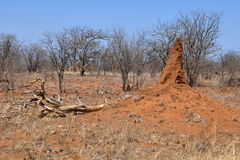 arican termitarium τοπίων Στοκ Φωτογραφία