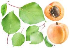 Aricot e foglie dell'albicocca Fotografia Stock Libera da Diritti