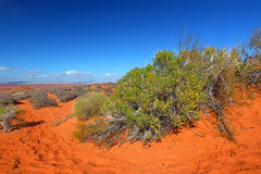 Arid Arizona Landscape Stock Photos