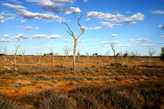 Arid Australian Outback. Arid scene of dried gum tree's in drought stricken area, Queensland Australia Stock Images