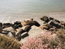 Arid Beach. Pacific bay with rocks and arid pink Royalty Free Stock Photos