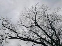 Arid. It arid branch Stock Image