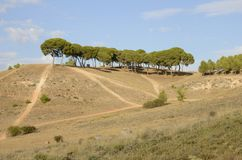 Arid Castile countryside. Trees on arid countryside in Belmonte, province of Cuenca, Spain Stock Photography