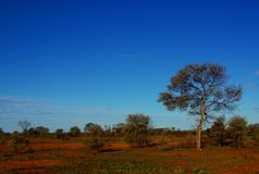 Arid Central Australia Stock Photography