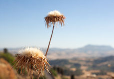 Arid countryside. In the summer, Leonforte - Sicily Royalty Free Stock Image