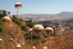 Arid countryside. In the summer, Leonforte - Sicily Stock Photo