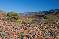 Arid desert riverbed. Dry arid landscape with panoramic views of desert shrub and mountains Stock Photos