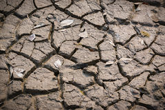 Arid and dry cracked earth with dry leaves. Stock Images