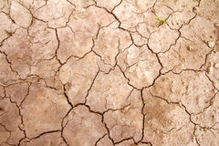 Arid earth. Cracks agricultural concept Stock Image