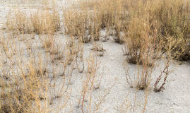 Arid environment. Detail shot showing a arid environment with sere plants and dry earth Royalty Free Stock Photography