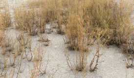 Arid environment Stock Photography