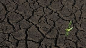 Arid farmland surface, with textured cracks and one weak, small weed plant growing. Background horizontal shot of farmland damaged by drought, raising major Royalty Free Stock Photo