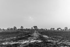 Arid Field. The arid field in undeveloped country Stock Image