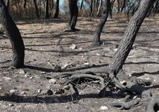 Arid forest ground. Natural disaster scenery with arid forest ground in Southern Italy Royalty Free Stock Photo