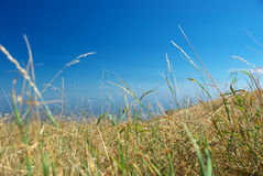 Arid grass. Natural composition. Element of design Royalty Free Stock Image