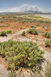 Arid grasses and sage brush Stock Images