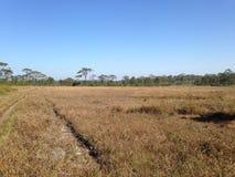 Arid grasslands Stock Photography