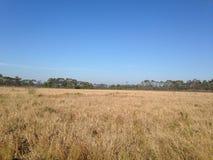 Arid grasslands Stock Images