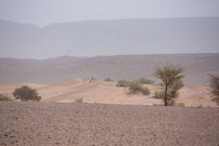 Arid and hot day in the desert of Sahara, Tata Stock Images