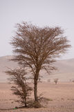 Arid and hot day in the desert of Sahara, Tata Royalty Free Stock Photography
