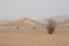 Arid and hot day in the desert of Sahara, Tata Stock Photo