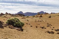 Arid igneous landscape with sparse greenery. Teide National park, Tenerife, Spain Stock Image